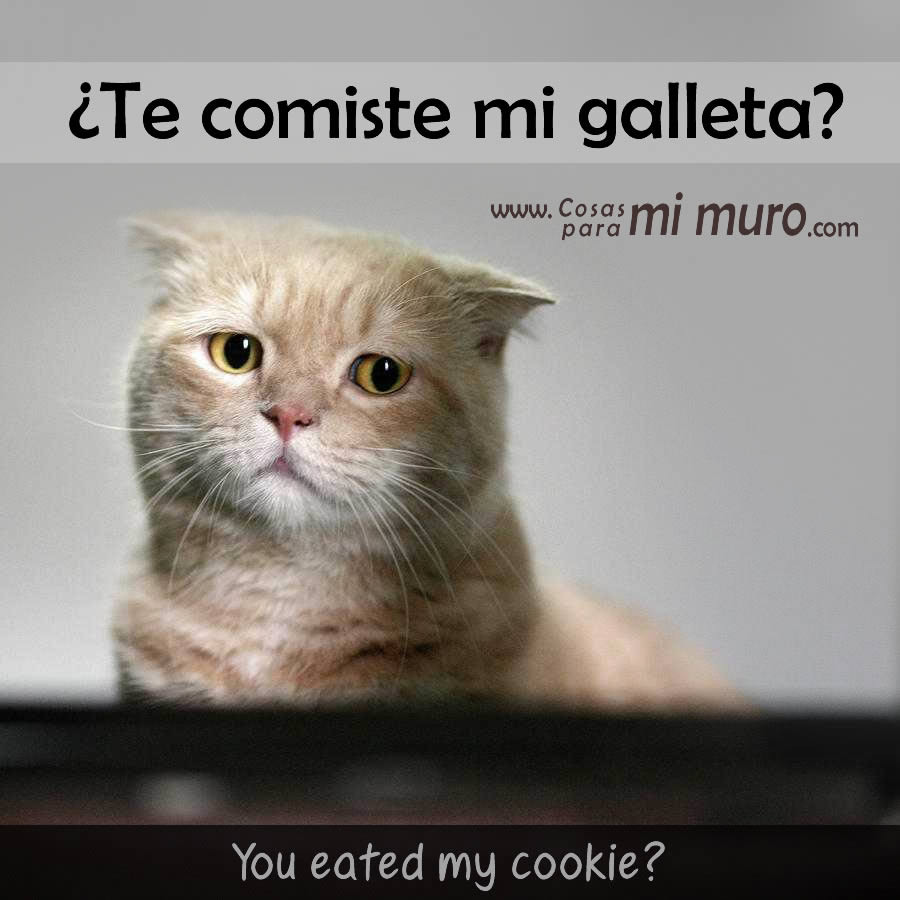 ¿Te comiste mi galleta?